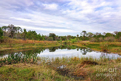 St. Lucie County Photograph - Saint Lucie Nature II by Liesl Marelli