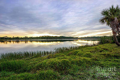 St. Lucie County Photograph - Saint Lucie Nature  by Liesl Marelli
