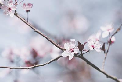 Photograph - Sakura #189 by Desmond Manny