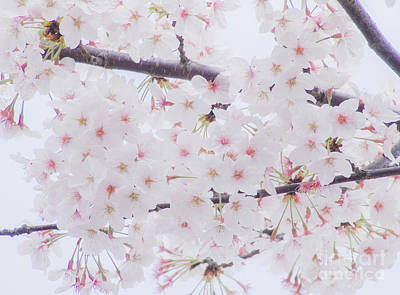 Photograph - Sakura by Andrea Anderegg
