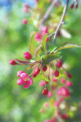 Photograph - Sakura Branch by Maria Angelica Maira