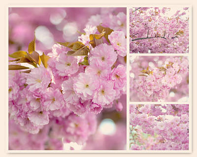 Photograph - Sakura Branches Collage by Jenny Rainbow