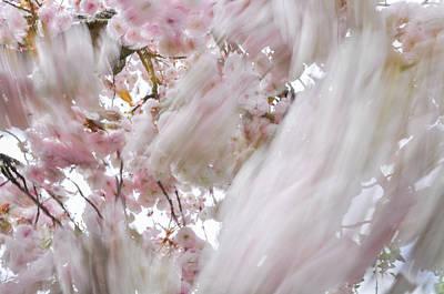 Photograph - Sakura Cherry Blossoms In Motion by Martin Stankewitz