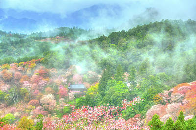 Photograph - Sakura Dreams by Midori Chan