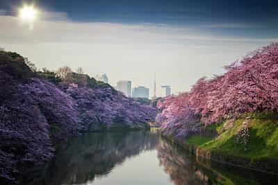 Balloon Flower Photograph - sakura flower and tokyo city, Japan by Anek Suwannaphoom