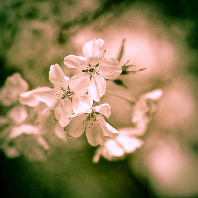 Sakura Photograph - Sakura Iv by Jon Woodhams