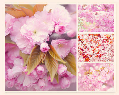 Photograph - Sakura Spring Bloom Collage by Jenny Rainbow