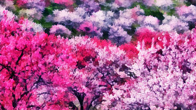 Photograph - Sakura Trees In Japan. Spring Fantasy by Jenny Rainbow