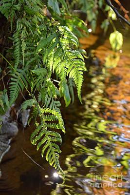 Priska Wettstein Pink Hues Royalty Free Images - Salamander Creek Royalty-Free Image by Charity Hommel