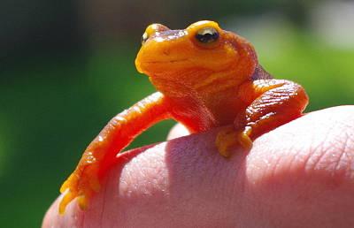 Photograph - Salamander by Kevin Bohner