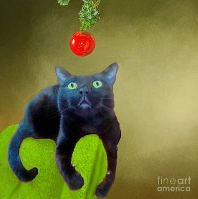 Photograph - Salem And Christmas Ornament 2 by Janette Boyd