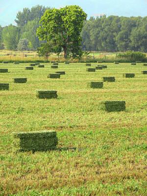 Photograph - Salem Hay Field by David King
