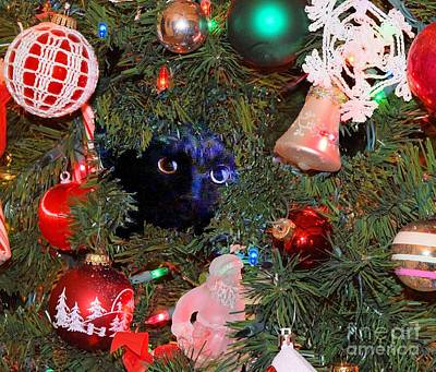 Photograph - Salem In Christmas Tree by Janette Boyd