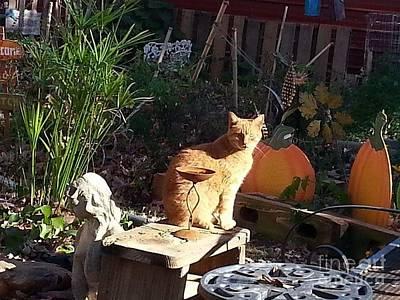 Photograph - Salem In The Garden by Rabiah Seminole