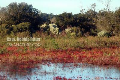 Photograph - Salicornia 4325 by Captain Debbie Ritter