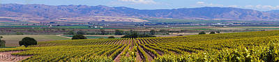 Photograph - Salinas Valley Hillside Vineyard by Derek Dean