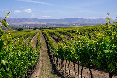 Photograph - Salinas Valley Vineyards by Derek Dean