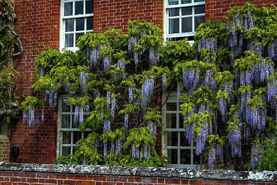 Water Droplets Sharon Johnstone - Salisbury Wisteria by Ross Henton