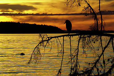 Photograph - Salish Sunset 1 by Inge Riis McDonald