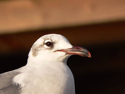 Photograph - Sally Seagull by Kathy K McClellan