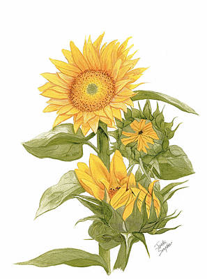 Painting - Sally's Sunflowers by Joette Snyder