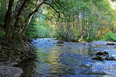 Photograph - Salmon Creek Majestic  by Tim Rice
