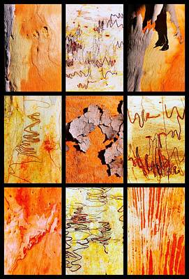 Photograph - Salmon Gum And Scribbly Gum Tree Montage by Lexa Harpell