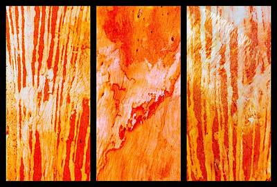 Photograph - Salmon Gum Tree Bark Triptych #4 by Lexa Harpell