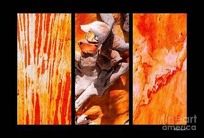 Photograph - Salmon Gum Tree Portrait #2 by Lexa Harpell