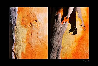 Photograph - Salmon Gum Tree Portrait by Lexa Harpell