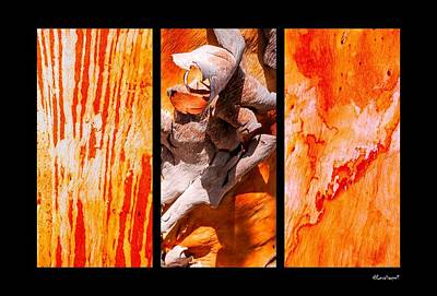 Photograph - Salmon Gum Tree Triptych #2 by Lexa Harpell