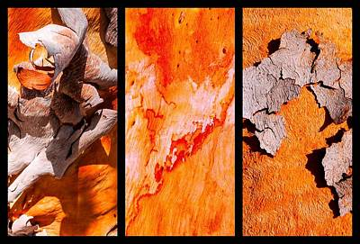Photograph - Salmon Gum Tree Triptych  #3 by Lexa Harpell