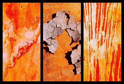 Photograph - Salmon Gum Tree Triptych  #5 by Lexa Harpell