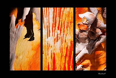 Photograph - Salmon Gum Tree Triptych by Lexa Harpell