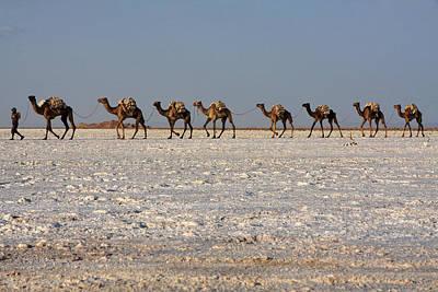 Camel Photograph - Salt Flats, Danakil Depression, Ethiopia by Aidan Moran