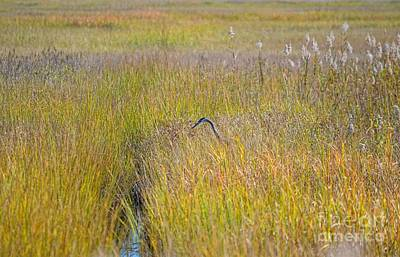 Photograph - Salt Marsh Heron by Sharon Woerner