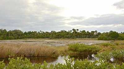 Photograph - Salt Marsh Low Tide by Carol Bradley