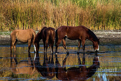Photograph - Salt River Horses by Kathy McClure