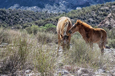 Photograph - Salt River Mare And Her Colt, No. 1 by Belinda Greb