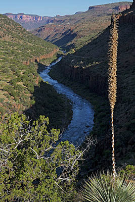 Photograph - Salt River Sotol by Tom Daniel
