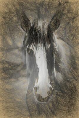Photograph - Salt River Stallion by Teresa Wilson