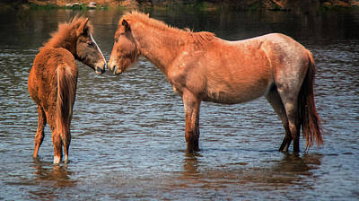 Photograph - Salt River Wild Horses 3015-032118-1cr by Tam Ryan