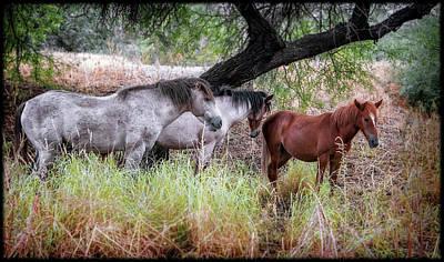 Photograph - Salt River Wild Horses by Elaine Malott