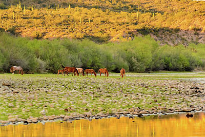 Photograph - Salt River Wild Horses by Emily Bristor