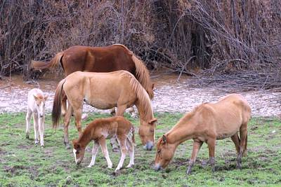 Photograph - Salt River Wild Horses In Winter by Judy Kennedy