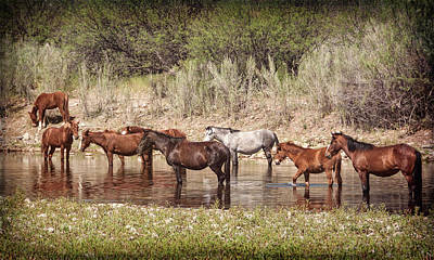 Photograph - Salt River Wild Horses Riverside  by Saija Lehtonen