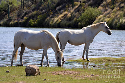 Salt River Wild Horses Tonto National Forest Two White Mares Number One Art Print by Heather Kirk