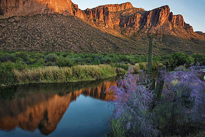 Photograph - Salt River With Saguaro And Blooming Ironwood by Dave Dilli