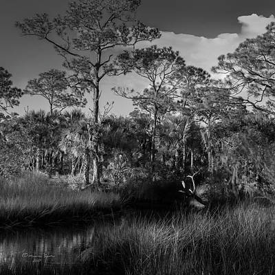 Photograph - Salt Springs by Marvin Spates