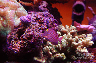 Photograph - Salt Water  Aquarium by Clayton Bruster